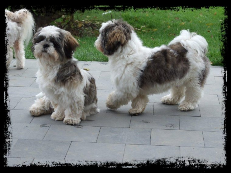 Suky, Colombine et Lucky