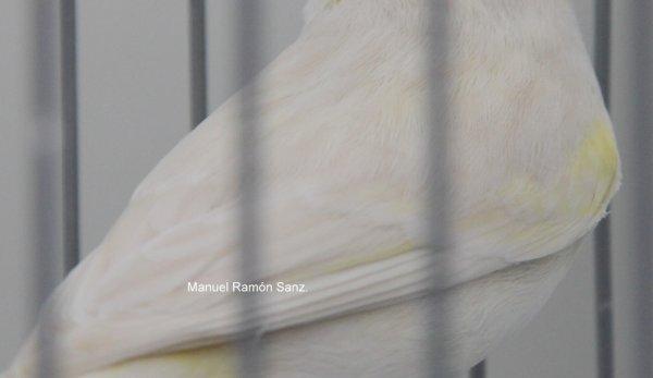 ISABELA PASTEL AMARILLO MARFIL MOSAICO. BRASIL 2.011.