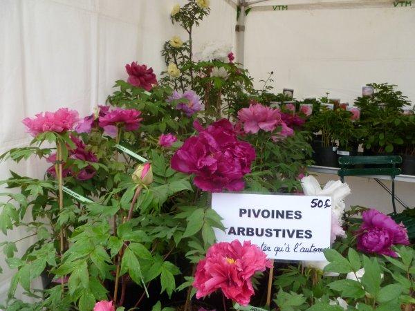 Pivoines & Chinoiseries!!!