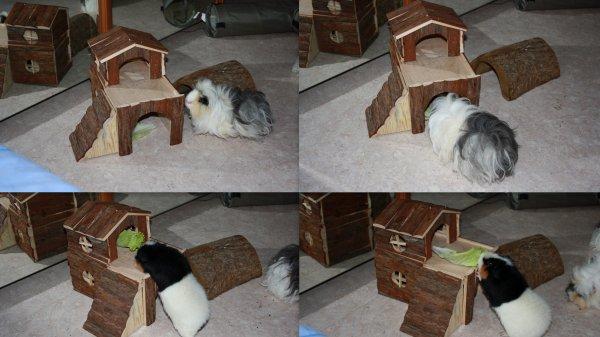articles de cochonsdinde67 tagg s maison cochon d 39 inde. Black Bedroom Furniture Sets. Home Design Ideas