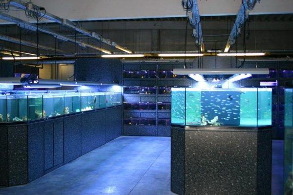 poisson d or l aquariophilie et monde vegetal entre