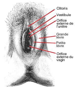 Scheresse vaginale et lubrification vaginale - e-santefr