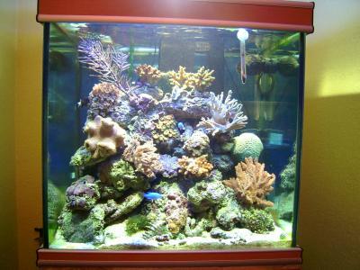 Aquarium recifal 350 litres ma vie mes passions for Aquarium 350 litres