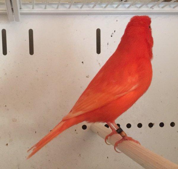 Premiers oiseaux pour concours