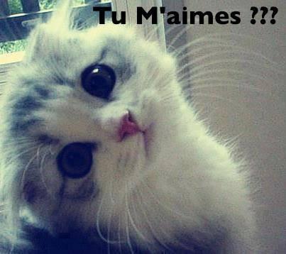 image de chat trop drole - Image De