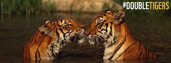 Conf�rence minist�rielle en faveur des tigres en Asie !