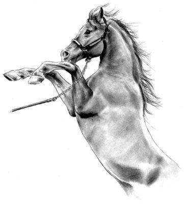 Dessin de cheval chevaux sauvage - Dessin noir et blanc animaux ...
