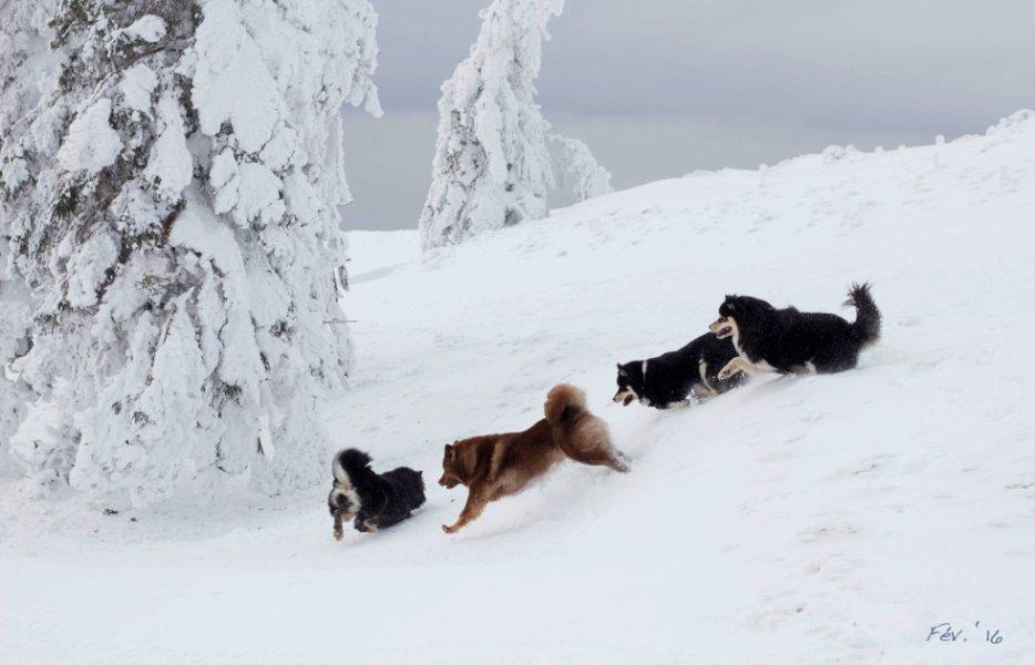 En balade dans la neige