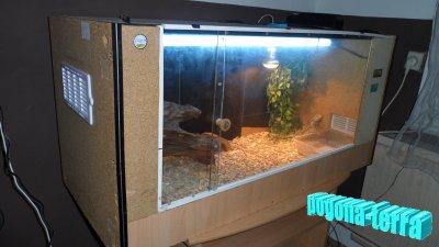voici mon terrarium fait maison en bois cam l on pogona. Black Bedroom Furniture Sets. Home Design Ideas