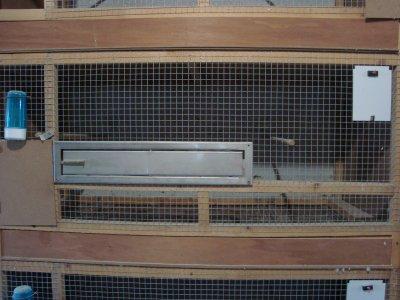 Cage d'élevage pour mes bourkes