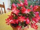 Photo de plantes97435
