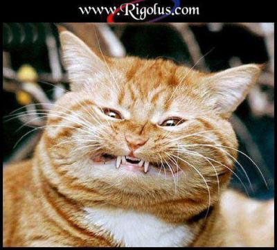 humour: chien et chat jouent au piano: s'amusent:marrant image! par