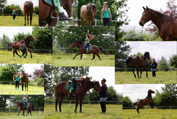 *Stage d'équitation éthologique : Marie Sutter