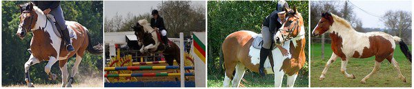 *Photos de 2007 jusqu'� 2012 *