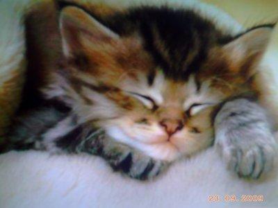 Encore un bebe chat blog de lacocotte999 - Photo de bebe chat ...