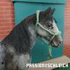 PassionXSchleich