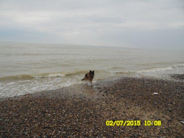 saint aubin sur mer (haute normandie)