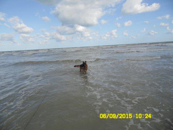 Journ�e � Saint Aubain sur Mer