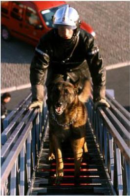Devenir maitre chien Sapeur pompier - Skyblog Pompiers