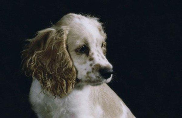 EMOUVANT:      Une famille retrouve son chien 8 ans apr�s son rapt