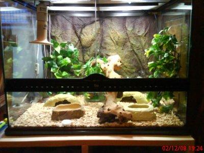 decoration terrarium gecko leopard