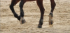 conseils-equitation2