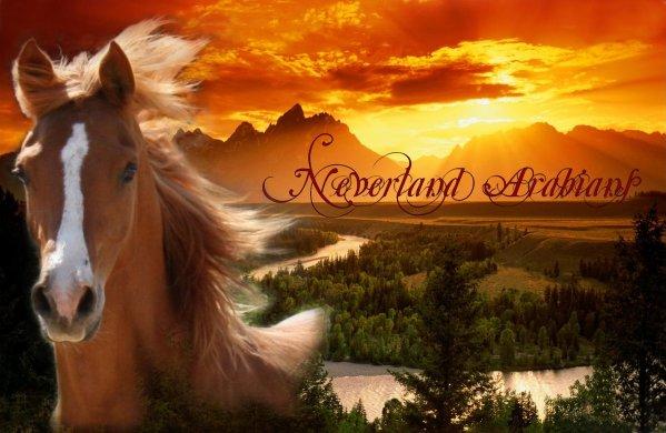 Neverland Arabians