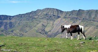 Le Pottok Pays Basque...!