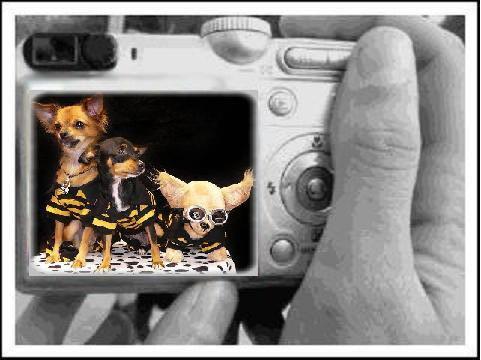 Prendre un chien en photo