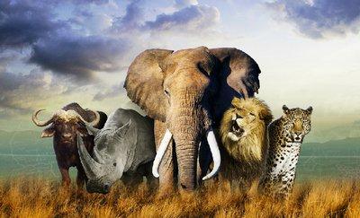 #DEBRIEF : Carnet d'enquête - Episode 3 : Dilemme au parc Kruger