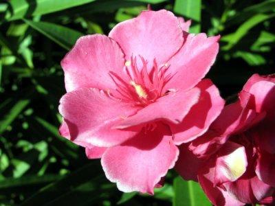 Fleur Pour Ma Fleur Chitta
