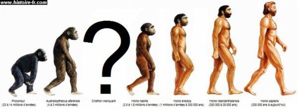 blague evolution humain