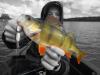 fish57