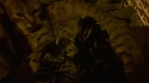 sa y est !!! Les chatons ont ouvert les yeux !!!!!!!!!!!!
