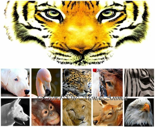 Les espèces menacées.
