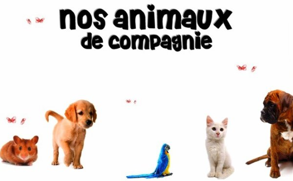 ANIMAUX .fr