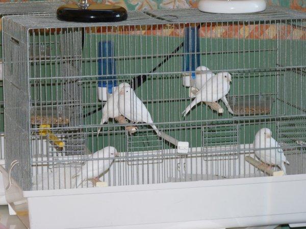 autres oiseaux en fin de séchage