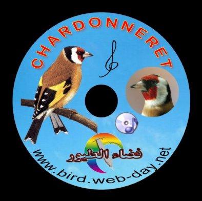 Telecharger Chant Canari Gratuit Download