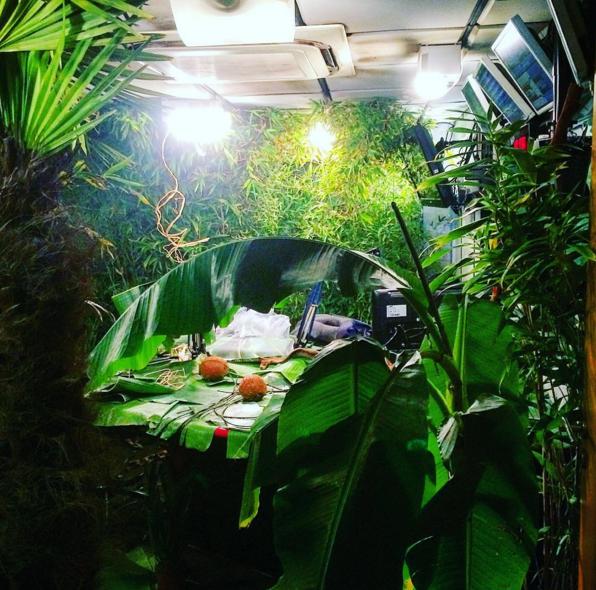 PNL, la jungle