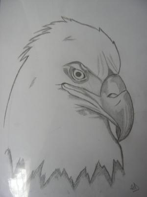 Dessin mes dessins - Dessin de aigle ...