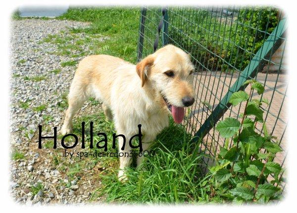 """""""Holland: Croisé griffon sable ... """""""