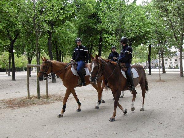 gendarmes cheval quexy cheval m rens. Black Bedroom Furniture Sets. Home Design Ideas