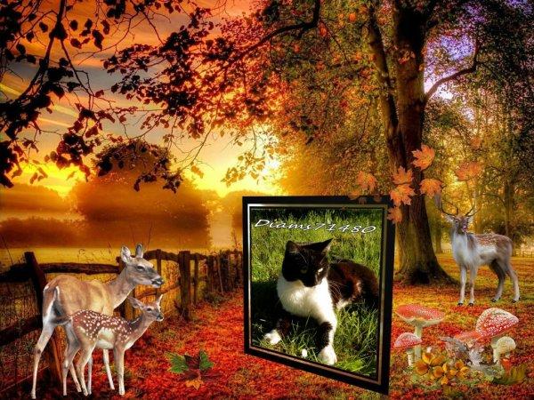 L'automne et ses couleurs! ;)