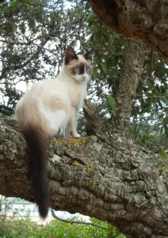 Une visite bien sympathique lors d'une d�tente � l'ombre d'un arbre. Je penses que le p�re ou la m�re devaient �tre de race siamoise