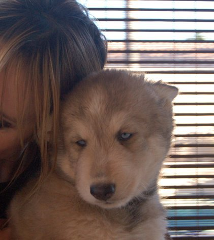 Jeanne mas adopte deux louveteaux tra hy b le blog m dia qui en a dans l 39 url - Jeanne mas et son mari ...