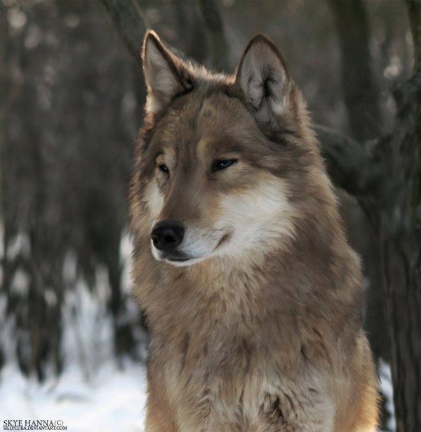 Fiche personnage : Loup