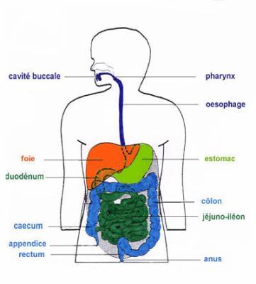 ☆ La maladie de Crohn, qu'est ce que c'est ? ☆