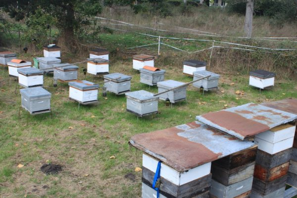 Un rucher d'hivernage