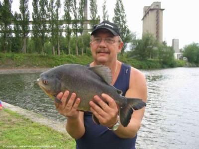 quel est ce poisson pris au canal du centre en belgique blog p cheur p che sandre carpe. Black Bedroom Furniture Sets. Home Design Ideas