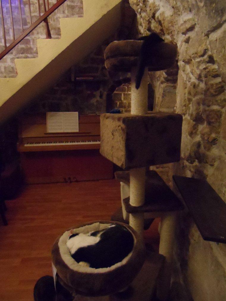 Le café des chats suite